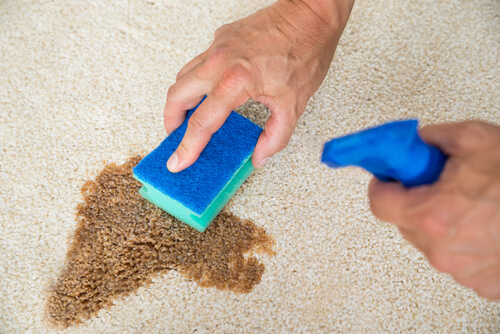 Carpet Cleaning Before Moving Out